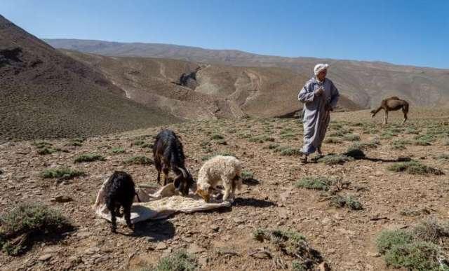 الترحال الرعوي وهيئة المناصفة يتصدران جدول اجتماع مجلس الحكومة المغربية اليوم