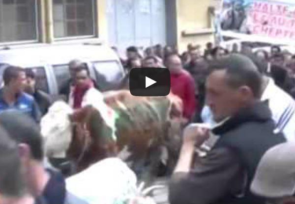 مسيرة حاشدة للأبقار والماعز في تيزي وزو بالجزائر