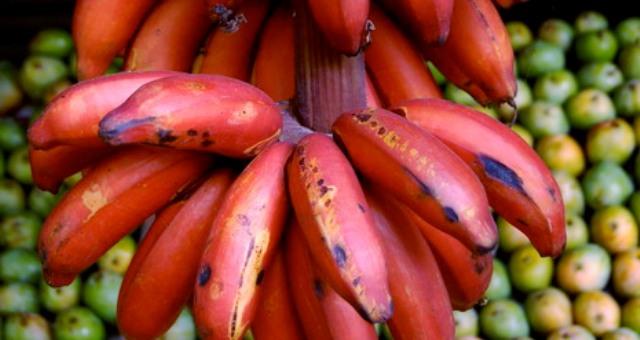 ماذا تعرف عن الموز الأحمر؟