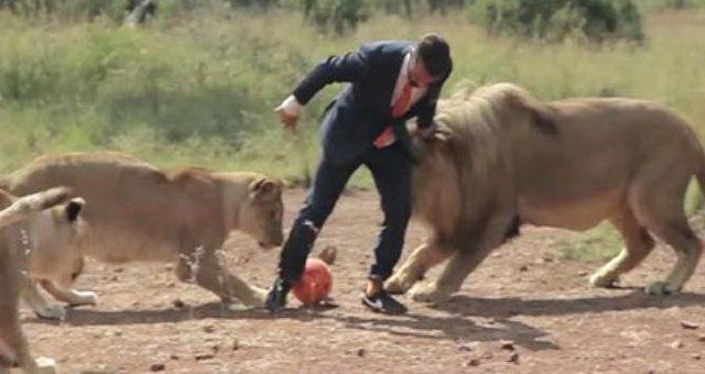 بالفيديو.. مغامر يلعب كرة القدم مع الأسود