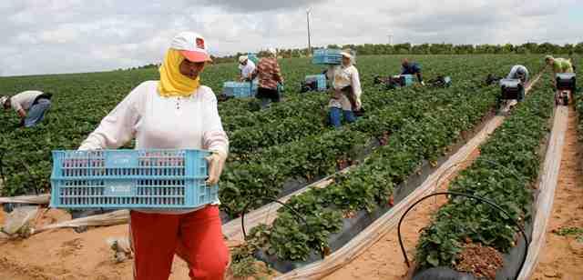 المغرب..افتتاح المناظرة الوطنية للفلاحة في مكناس بحضور رئيس السنيغال