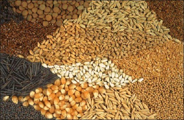 أخنوش يتوقع أن يحقق إنتاج الحبوب في المغرب رقما قياسيا يبلغ 110 مليون قنطار