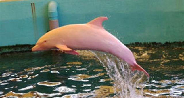 بالفيديو.. دلفين نادر يتغيّر لونه كالسحلية