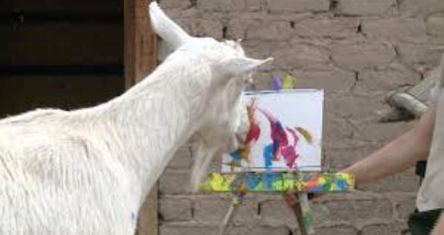بالفيديو.. ماعز يرسم لوحات فنية!