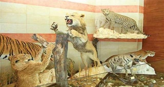 افتتاح أكبر متحف للحيوانات المحنطة بجبل لبنان