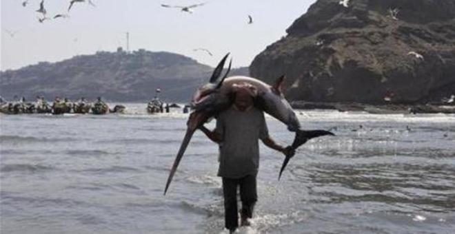 سمكة تقتل صياداً