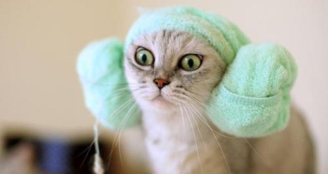 أطباء يحذرون من تأثير الأصوات المزعجة على القطط