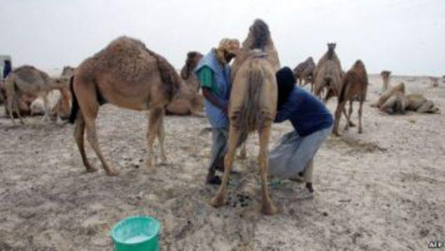 المجاعة تهدد آلاف الموريتانيين لهذا السبب!