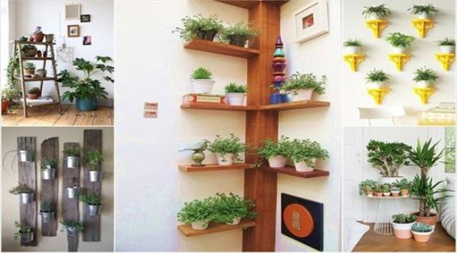 10 أفكار لعرض النباتات داخل المنزل