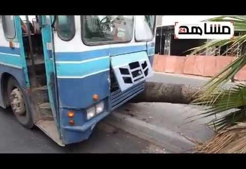 فيديو: حافلة مجنونة تصطدم بنخلة