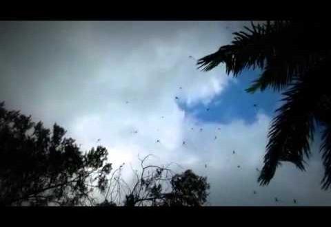 فيديو…السماء تمطر عناكب بأستراليا