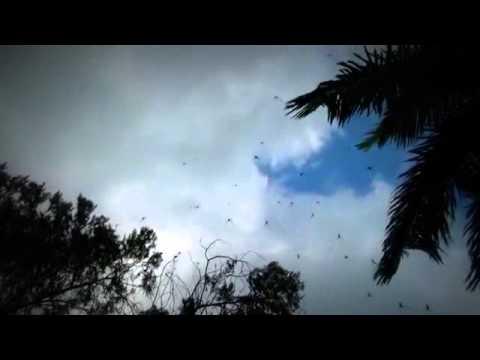 فيديو...السماء تمطر عناكب بأستراليا