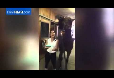 "حصان يطفئ شموع عيد ميلاده مع ابتسامة ""عريضة"""