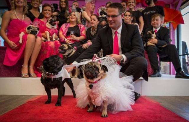 حفل زفاف لكلبين في أستراليا وفستان العروس بـ2000 دولار