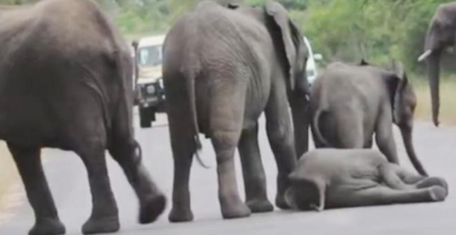 بالفيديو.. مشهد مؤثر من عالم الحيوان