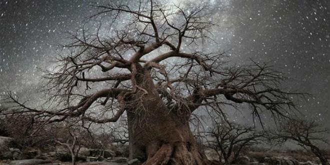 أشجار-مشاهد24