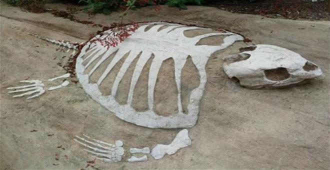 العثور على حفرية لأقدم سلحفاة في العالم