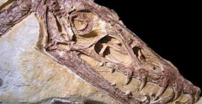 اكتشاف الديناصور