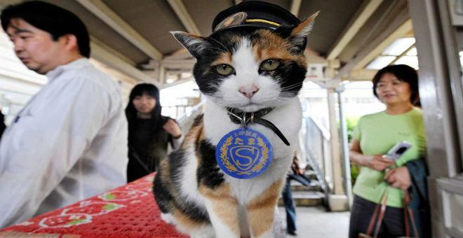 جنازة مهيبة لقطة برتبة رئيسة محطة قطارات
