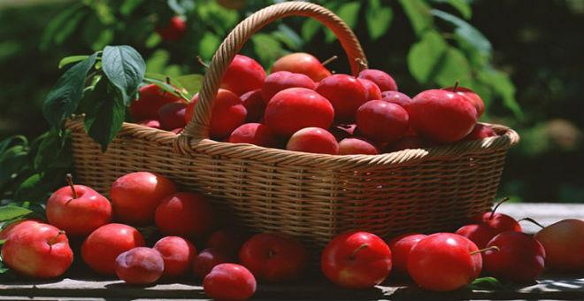 تعرفوا على القيم الصحية والجمالية لفاكهة الخوخ