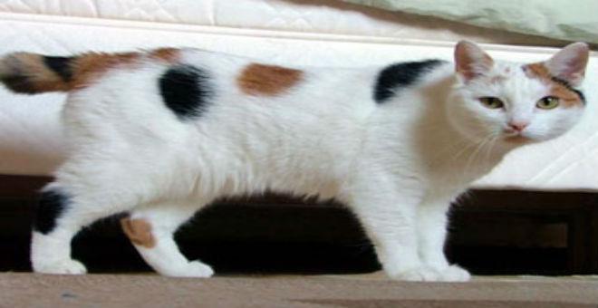 قطة تهاجر من السودان إلى أوروبا