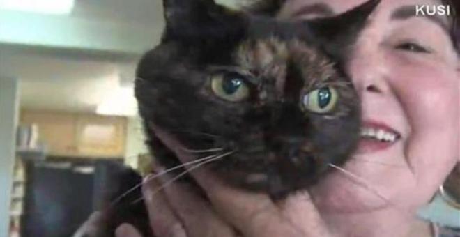 وفاة أكبر قطة معمرة في العالم عن عمر يناهز 27 عاماً 