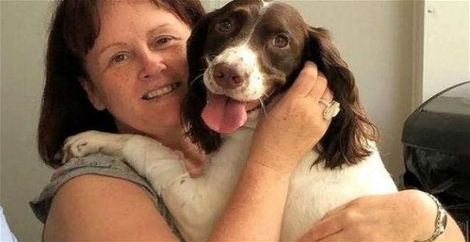 انتحار 600 كلب في اسكوتلندا