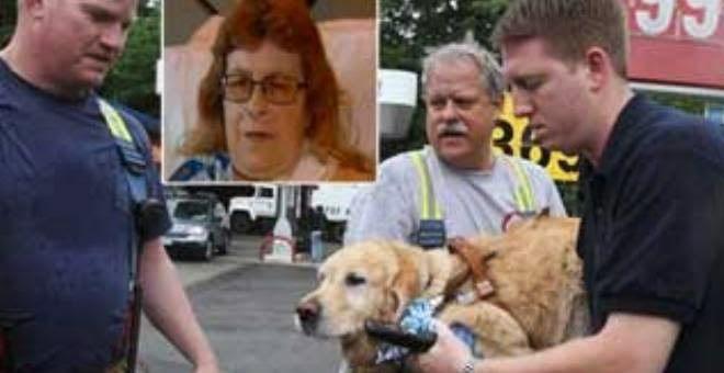 كلب يرمي نفسه أمام حافلة لإنقاذ صاحبته العمياء