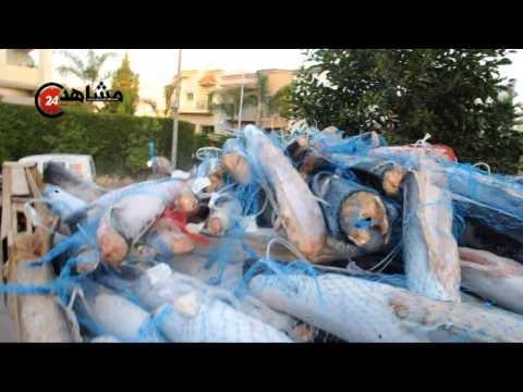 إتلاف 15 طن من السمك مخزون بدون رخصة تبريد في الدارالبيضاء