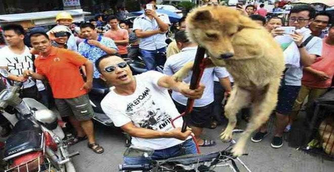 مهرجان أكل الكلاب في الصين يثير سخطا عارما