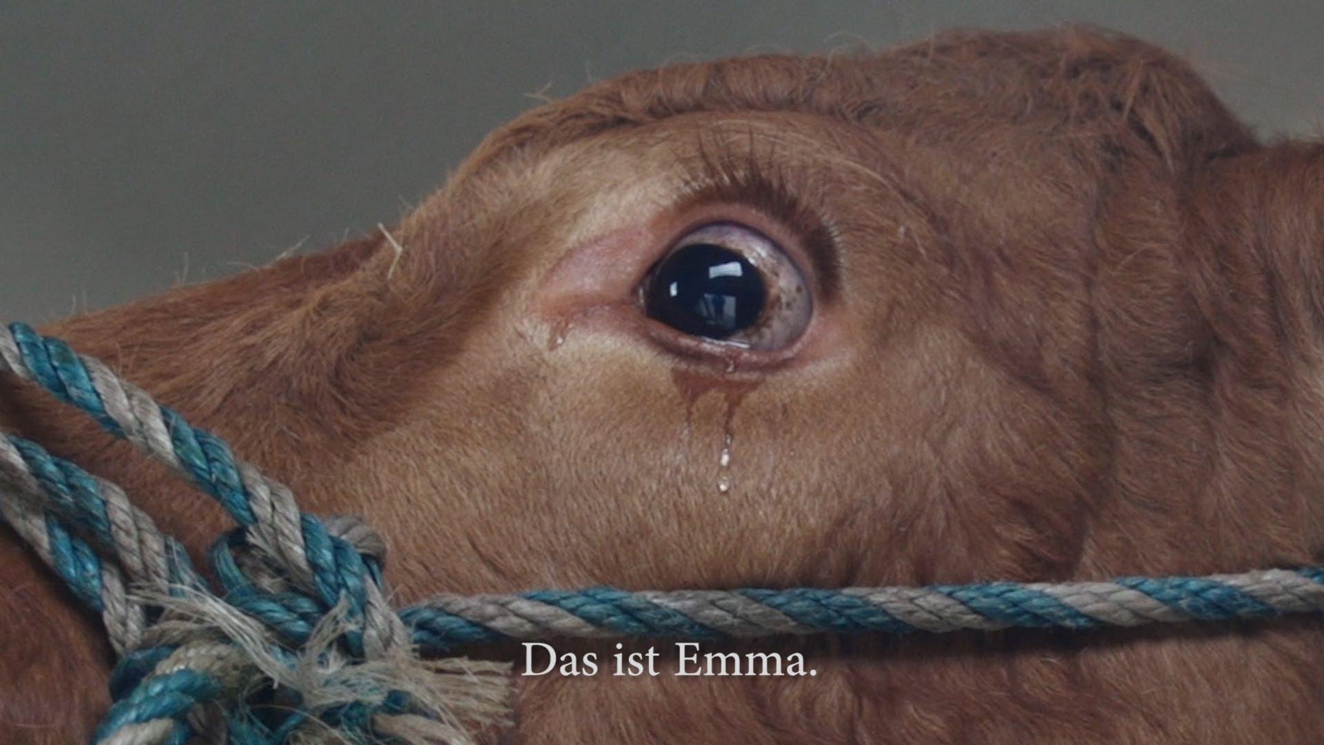 فيديو...بقرة تنجو من الذبح بسبب دموعها