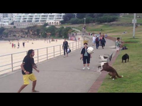 بالفيديو...كلب يلعب كرة القدم