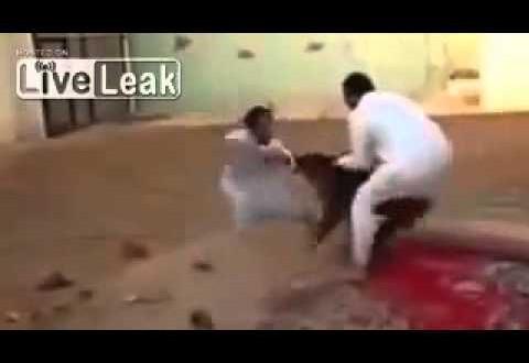 كلبان يتركان مباراة مصارعة ويهاجمان أحد المنظمين