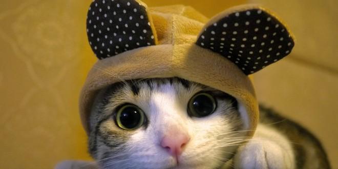 دراسة:مشاهدة فيديوهات القطط  تشفي البشر من بعض الأمراض