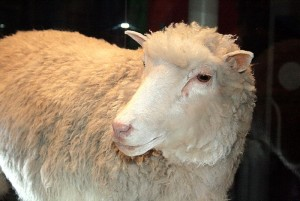 GhadiNews - Dolly the sheep635693632339603454