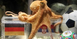 GhadiNews - Paul the Octopus635693632339135453