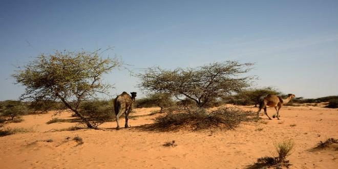 Mauritanie Desert1