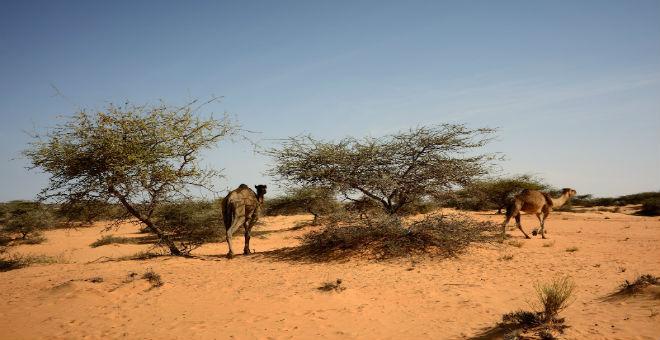 الحكومة الموريتانية تحذر من اتساع رقعة التصحر