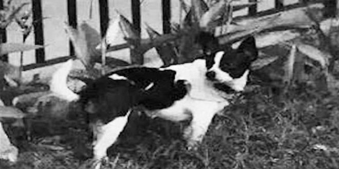 dog-machahid24