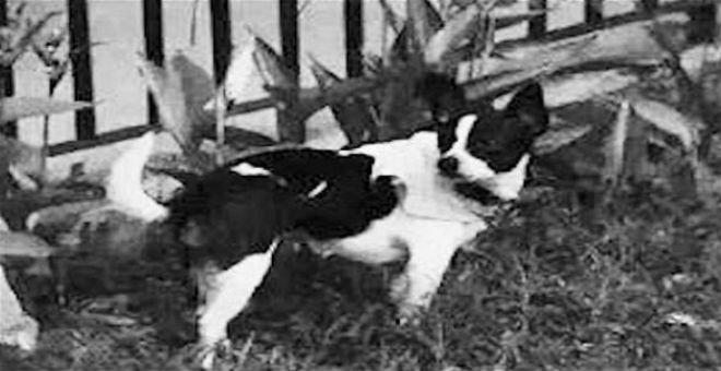 صينية تعرض منزلها مكافأة لمن يجد كلبها