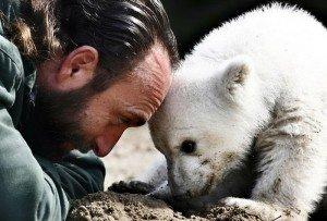 GhadiNews - Bear Knut635693632339447454