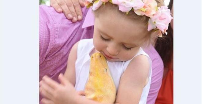 طفلة لا تنام قبل تقبيل ثعبانها