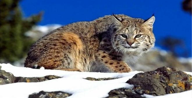 أستراليا تنفق 5 مليون دولار لتعدم مليوني قطة