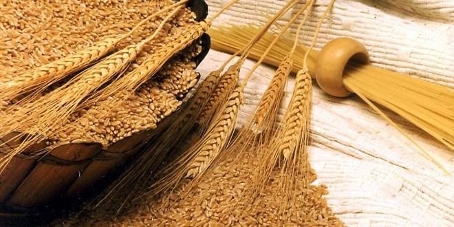 القمح اللين