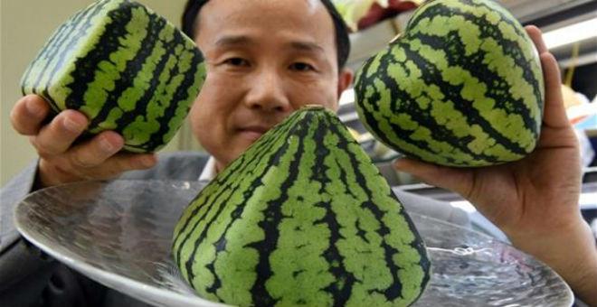 في اليابان:بطيخ للزينة على شكل قلب