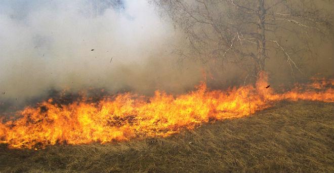 حريق يأتي على خمسة هكتارات بإحدى غابات طنجة