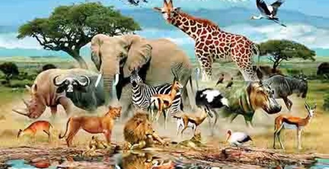 صيام الحيوانات.. غرائب وعجائب!