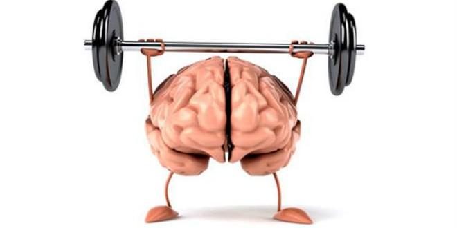 دماغ-مشاهد24