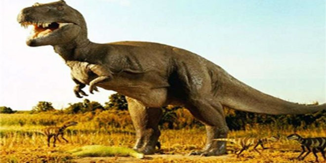 ديناصور،مشاهد24