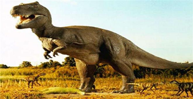 اكتشاف أسنان لأكبر ديناصور في اليابان